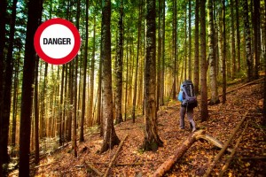 2010_danger-en-forêt